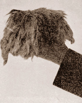 Lenin's wig_internet