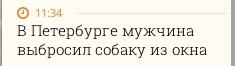"""Man throws dog from window in Petersburg"""