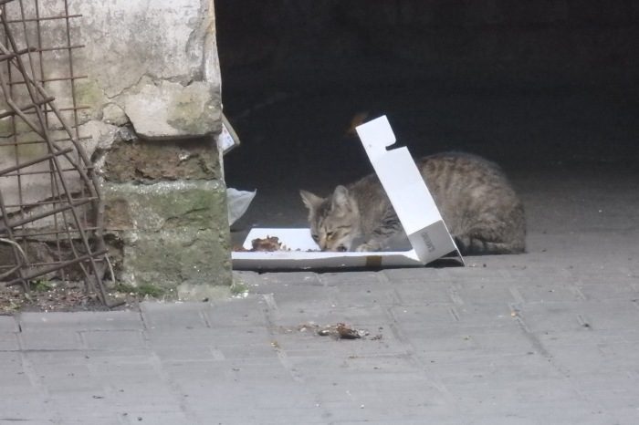 Cat eating scraps from pizza box. May 24, 2016, Petersburg. Photo by the Russian Reader